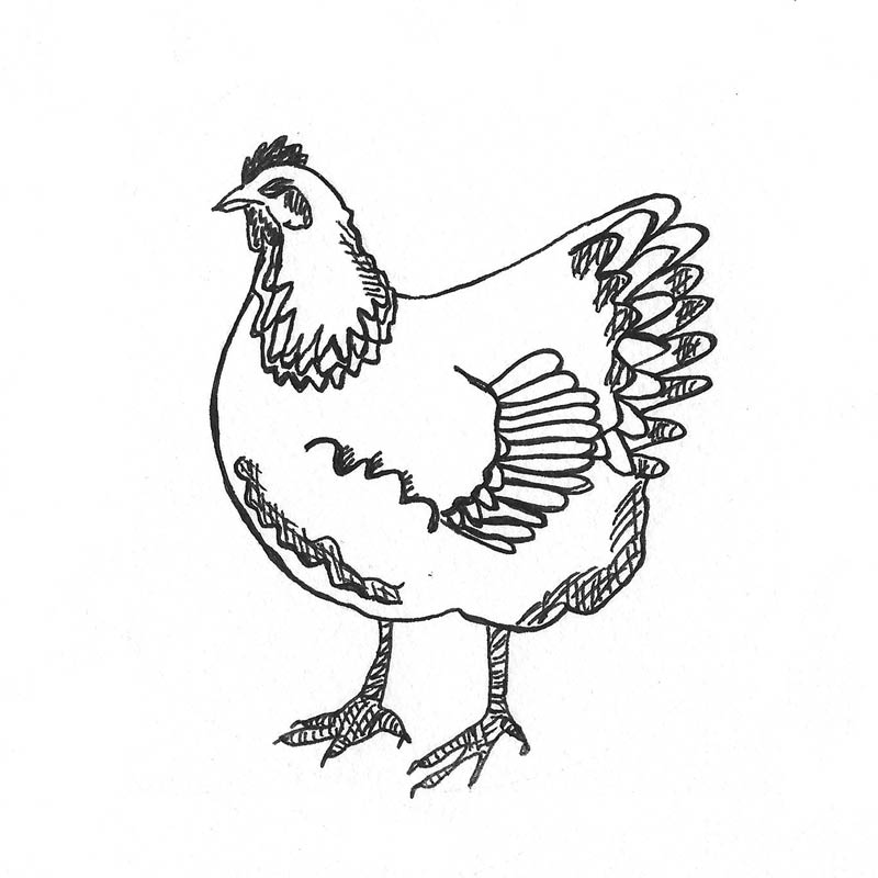 icon-chicken